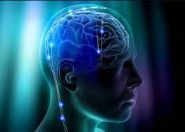 این تصویر دارای صفت خالی alt است؛ نام پروندهٔ آن روان-شناسی-بیولوژیکی.jpg است روانشناسی بیولوژیکی